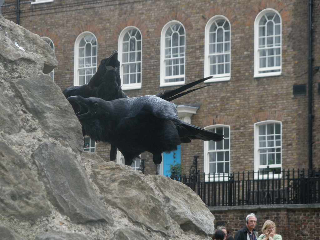 Cuervos en la Torre de Londres