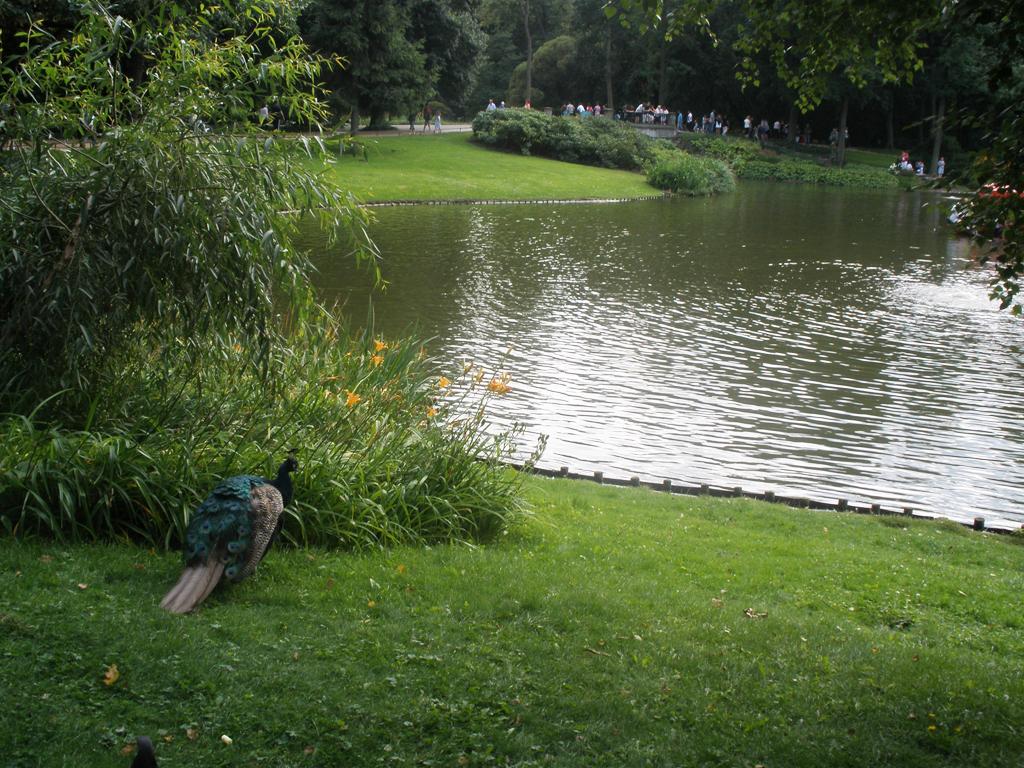 Pavos reales en parque Lazienski