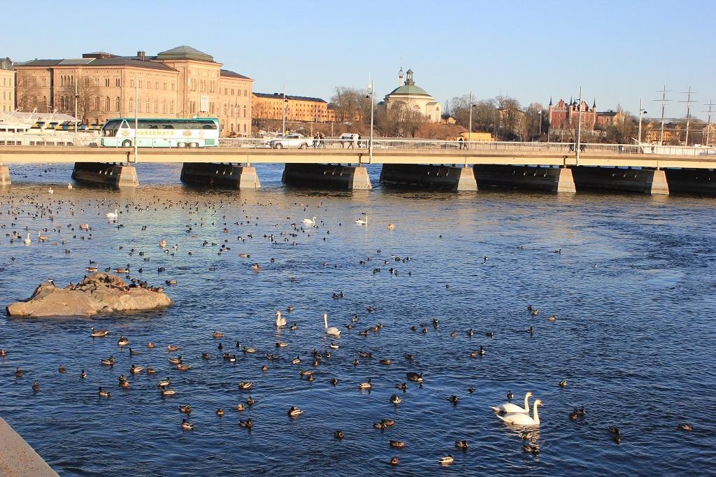 Patos en Estocolmo