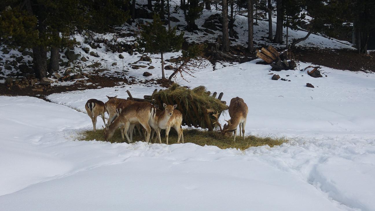 Animales en Naturlandia