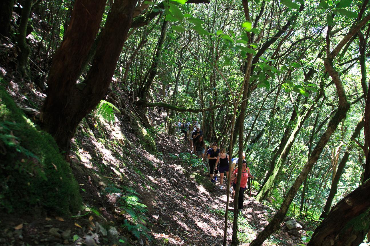 Bosque laurisilva Anaga