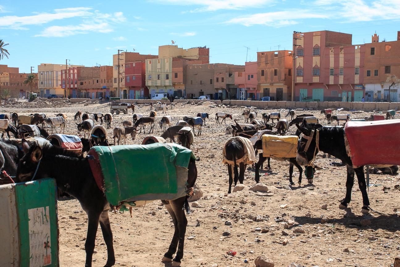 Burros en el mercado de Rissani en Marruecos