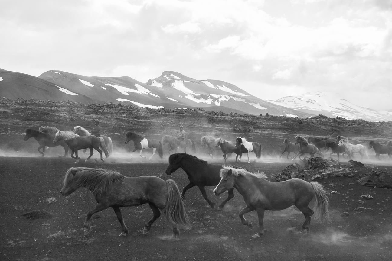 Caballos salvajes en las Tierras Altas