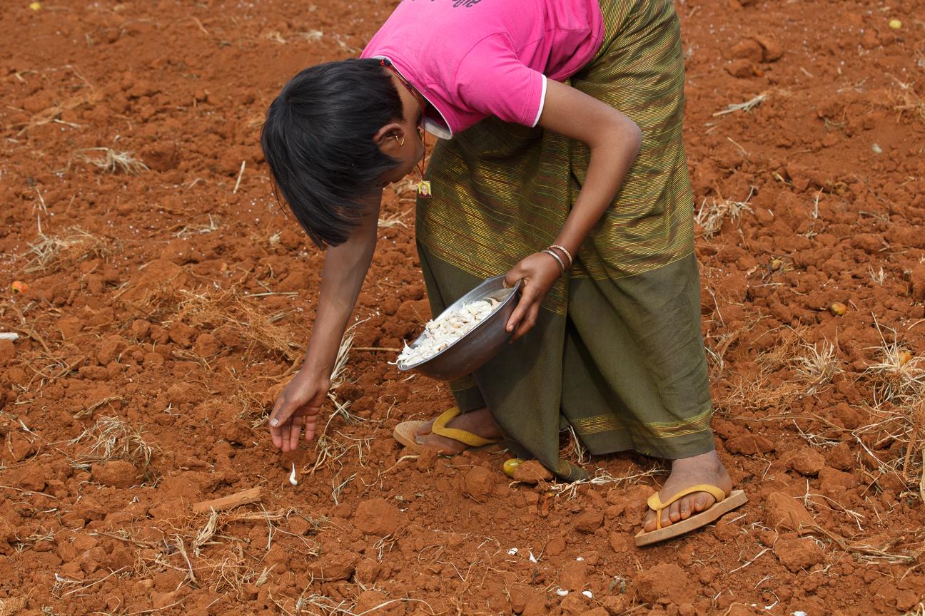 Chica ayudando a sembrar ajos durante las vacaciones