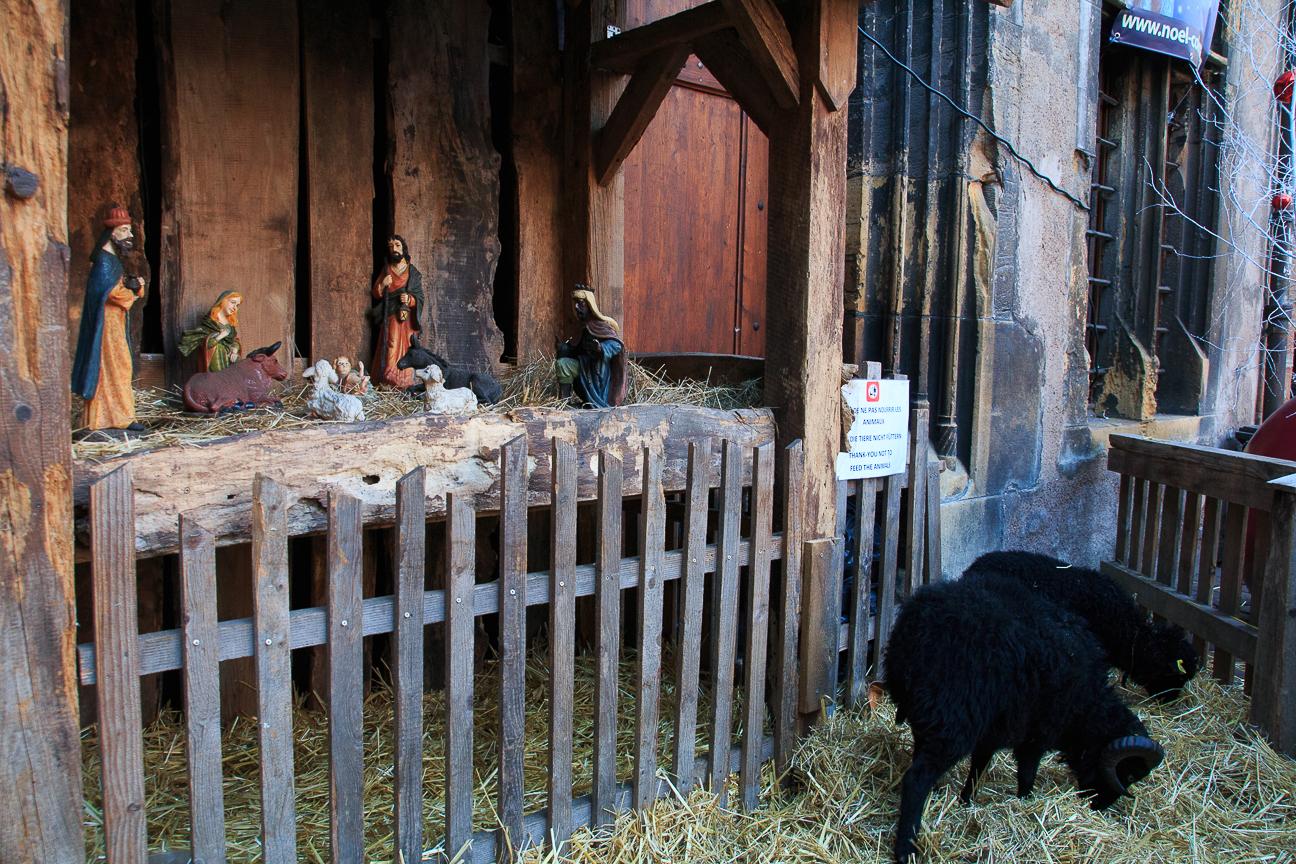 Pesebre con animales en Alsacia - Colmar