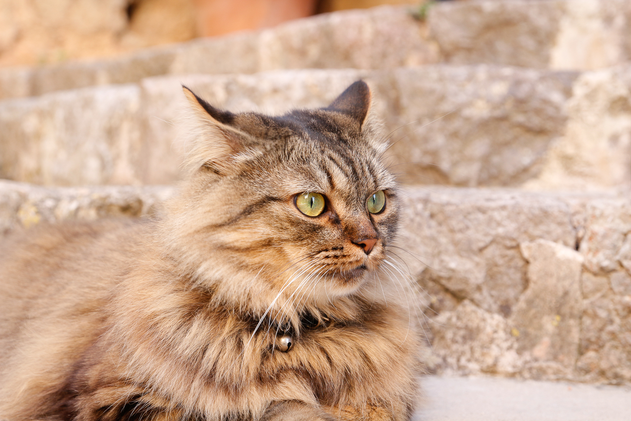 El gato fotogenico de Valldemossa en Mallorca