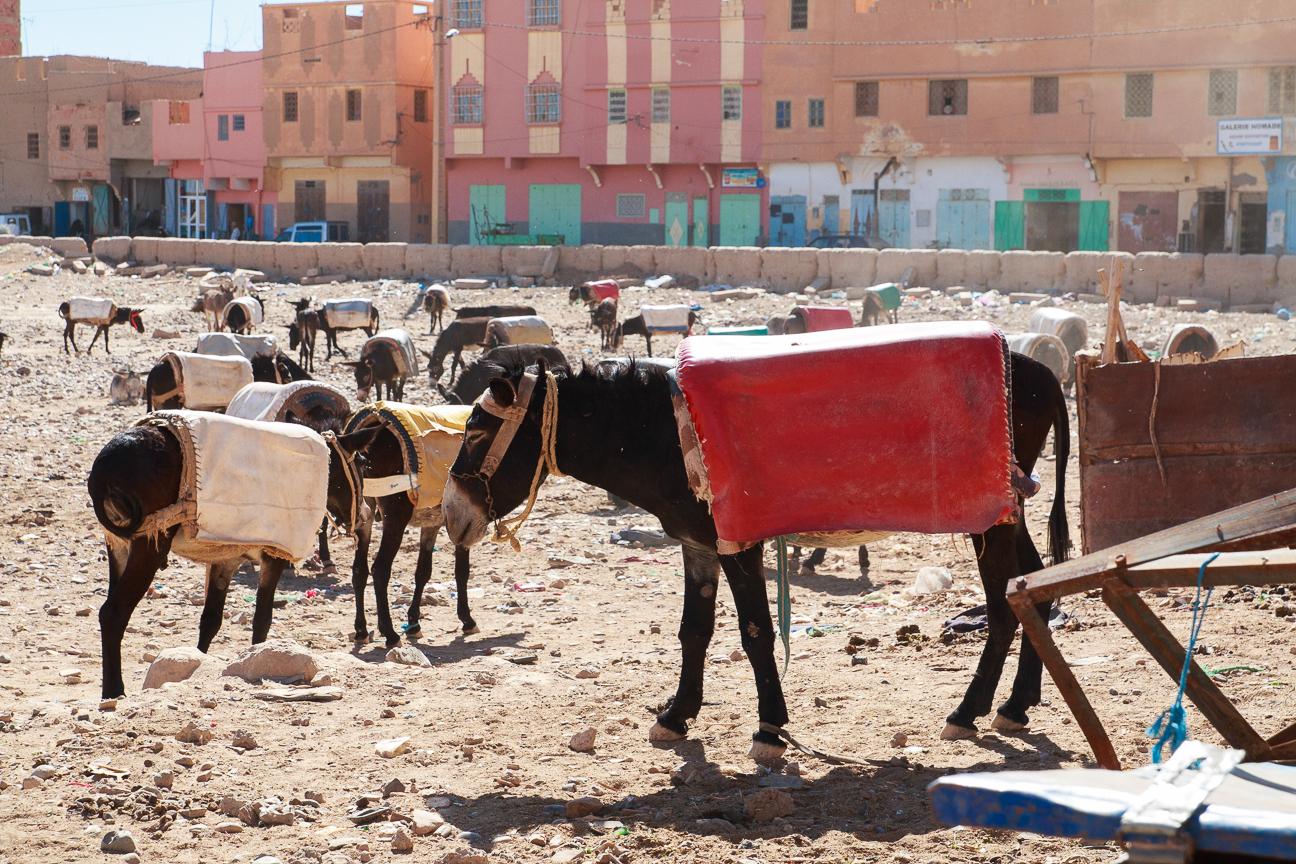 Mercado de burros en Rissani