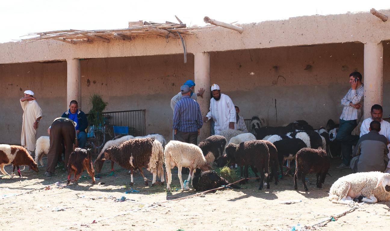 Mercado de corderos en Rissani