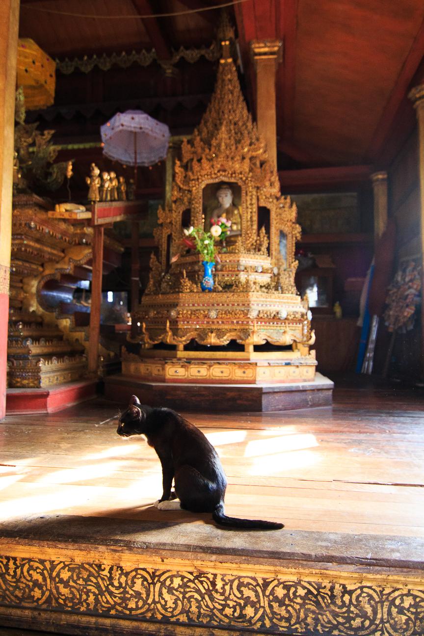Monasterio de los gatos saltarines en el lago Inle