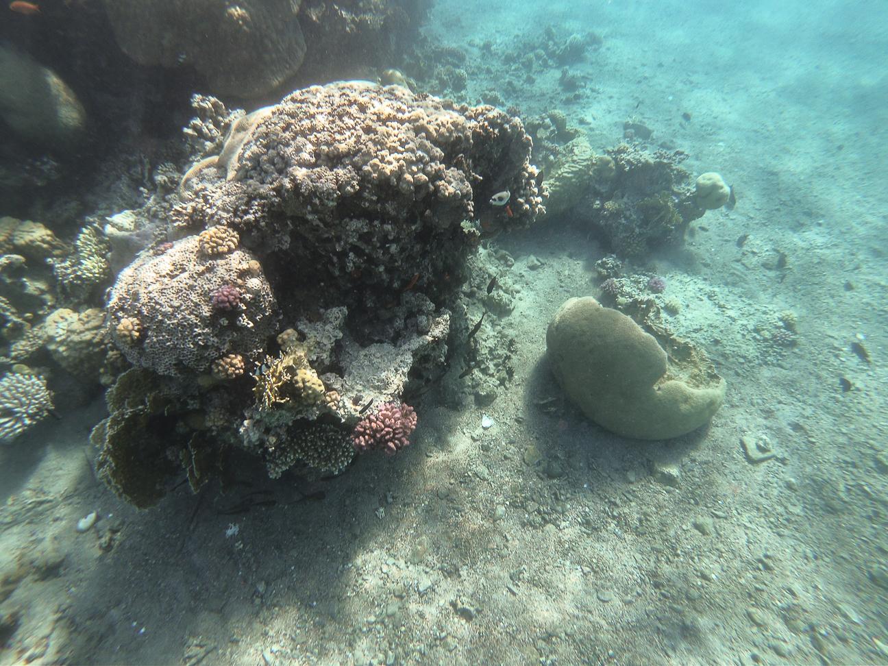Que ver en Jordania Coral en el Mar Rojo