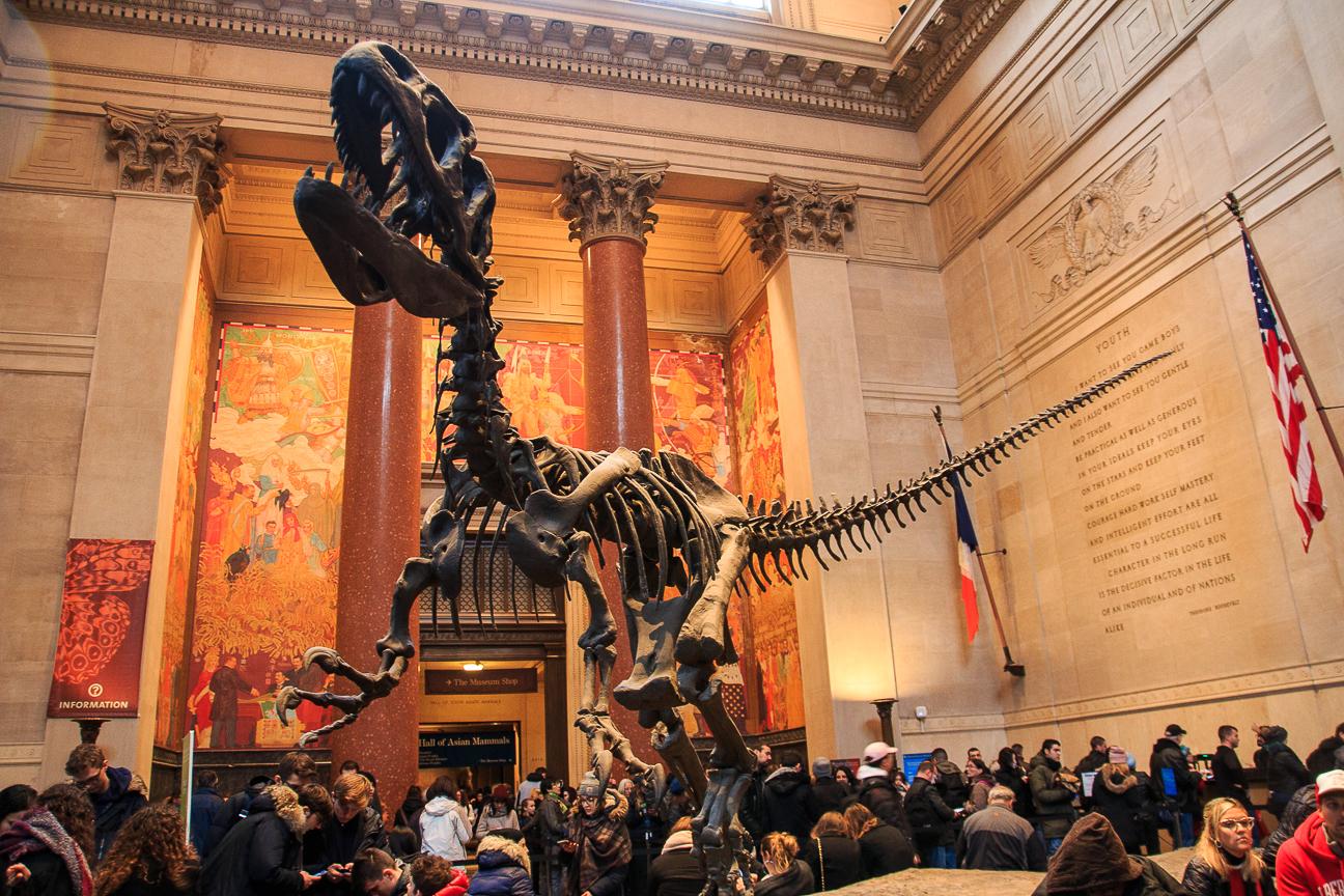 Que ver en Nueva York dinosaurios en el Museo de Historia Natural