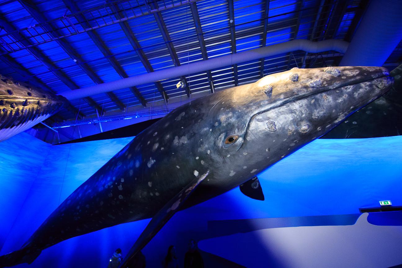 que-ver-en-reikiavik-museo-ballenas Todo lo que tienes que ver en Reikiavik en un dia