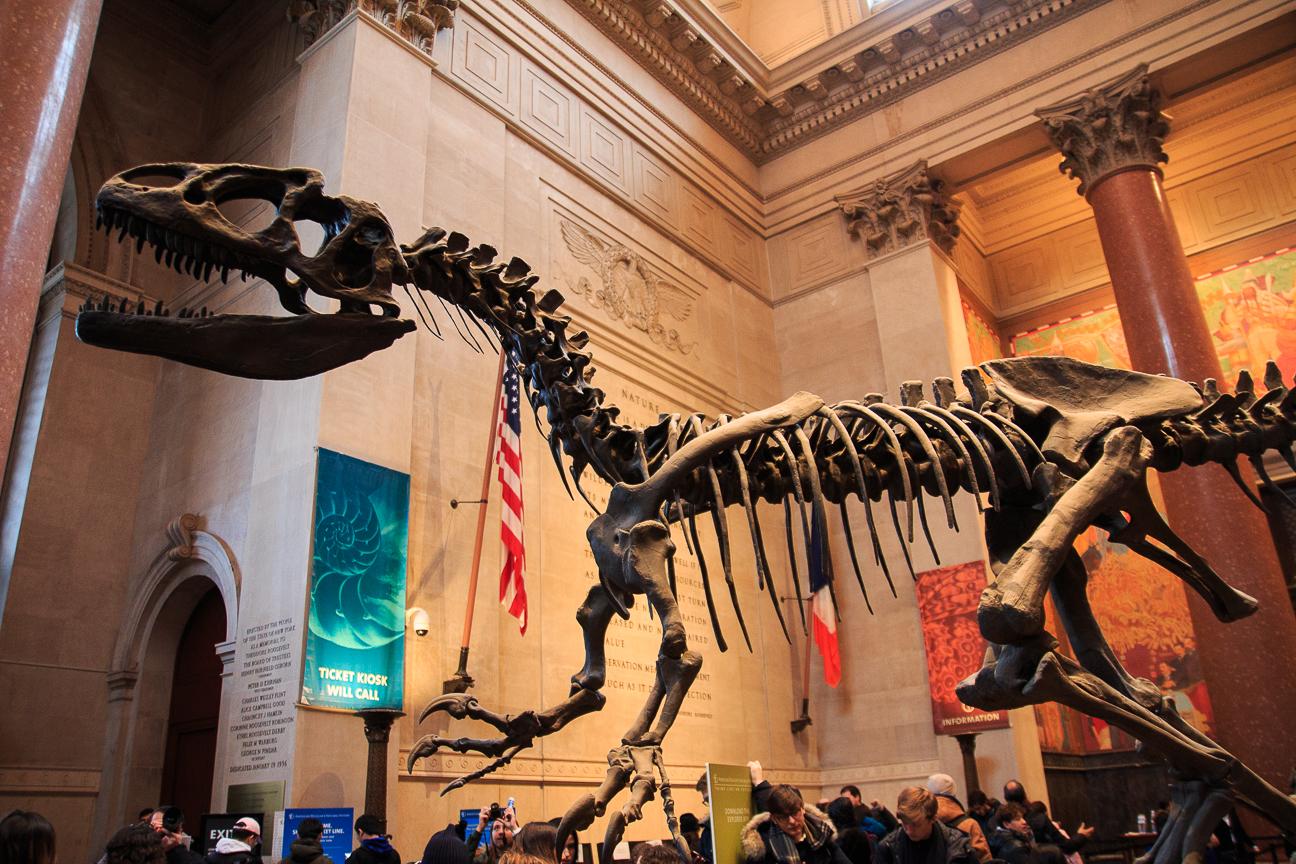 T-Rex en el Museo de Historia Natural de Nueva York